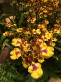 Orchids from the orchid garden at Singapore's Changi airport.
