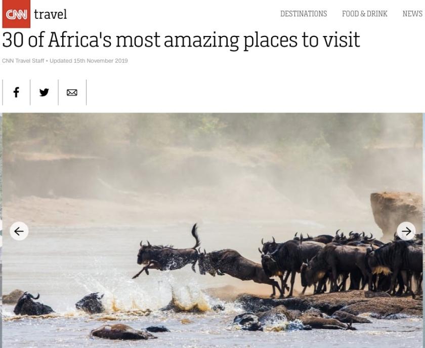Wildebeest migrating